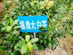 涌溪育苗施設