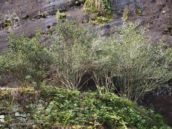 武夷山の画像 p1_10