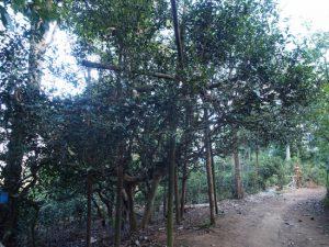 南糯山半坡老寨